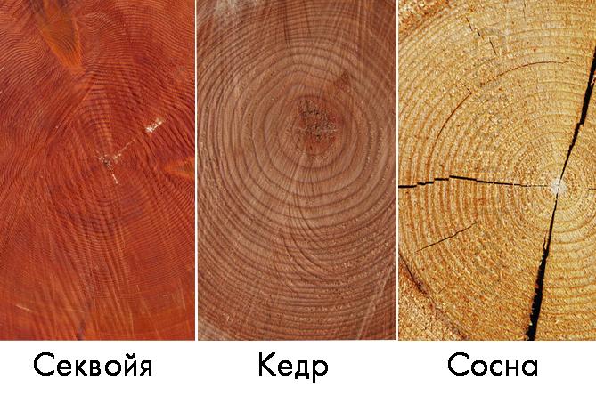 Сравнение дерева
